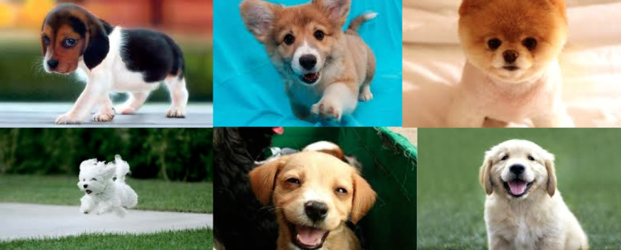 Puppies-Natural-ADD-Remedy-ADHD