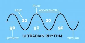 Ultradian Rhythm Willpower